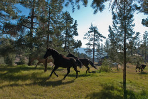Horses at Spring Valley Ranch